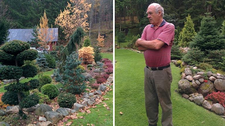 En trädgård med stenar och träd och en bild på en man som står i trädgården.