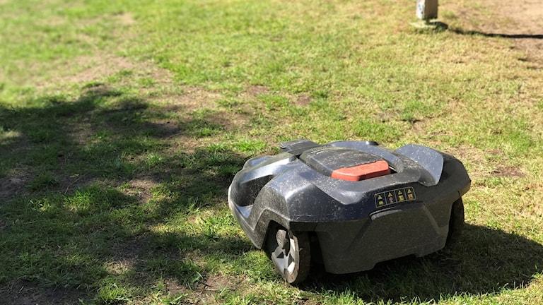 Robotgräsklippare på gräsmatta