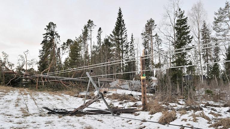 Ett träd som fallit över elledningar. Foto: Tommy Andersson/TT.