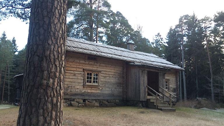 träfärgad stuga i skog
