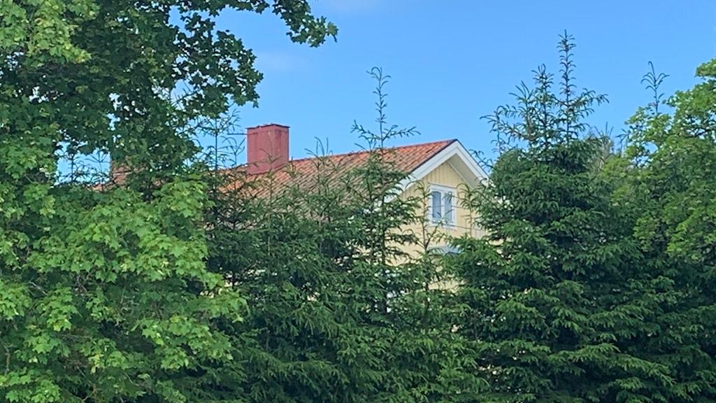 Hustak bakom trädtoppar. Foto: Amanda Moln/ Sveriges Radio