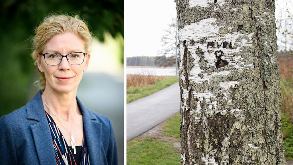 Sandra Friberg och en björk med namnet Kevin inristat. Foto: Uppsala universitet och Fredrik Sandberg/TT.