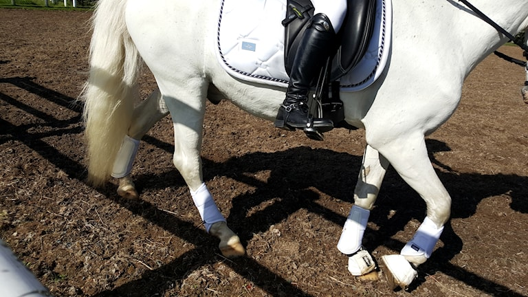 Genrebild hästtävling