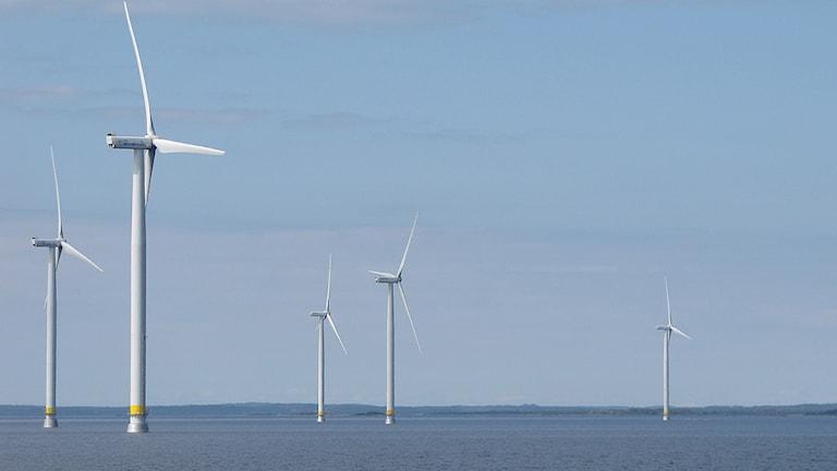 Vindkraftverken på Gässlingegrundet. Foto: Roy Malmborg/Sveriges Radio.
