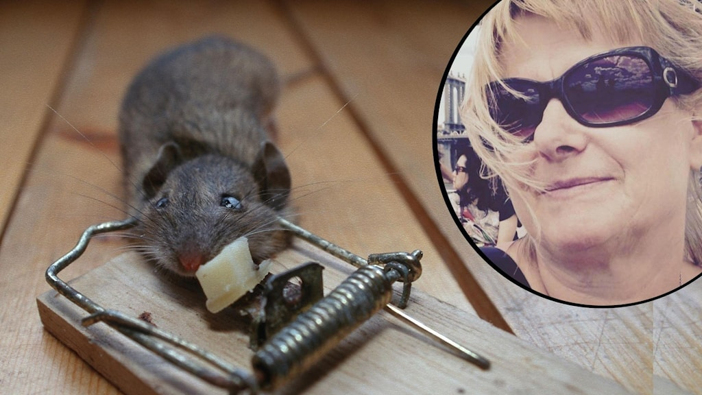 collage med mus i fälla och kvinnoporträttare