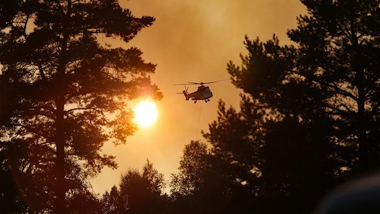 Helikopter vid skogsbranden i Östra Tönnet. Foto Örjan Bengtzing/Sveriges Radio.