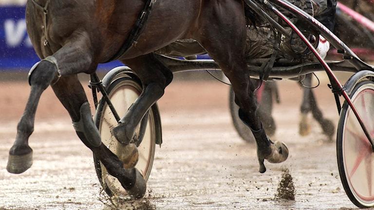 En travhäst, närbild på hovar. Del av sulky syns. Foto: Thomas Johansson/TT.