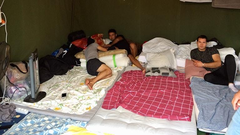 killar ligger i grönt tält med täcken