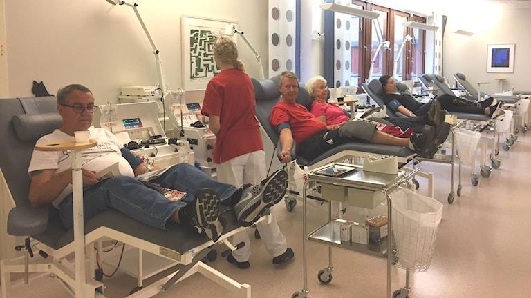 Fyra plasmagivare ligger på sängar med slang i armen och en tappningsmaskin vid sin sida. En personal grejar vid en givare.