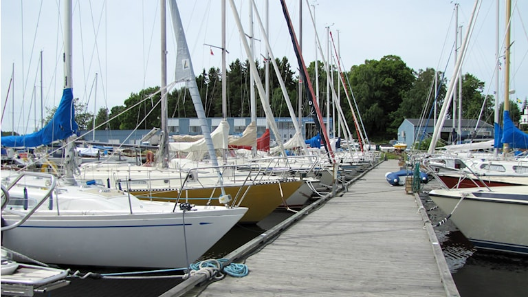 Segelbåtar i en hamn. Foto: Carol Atallah/Sveriges radio.
