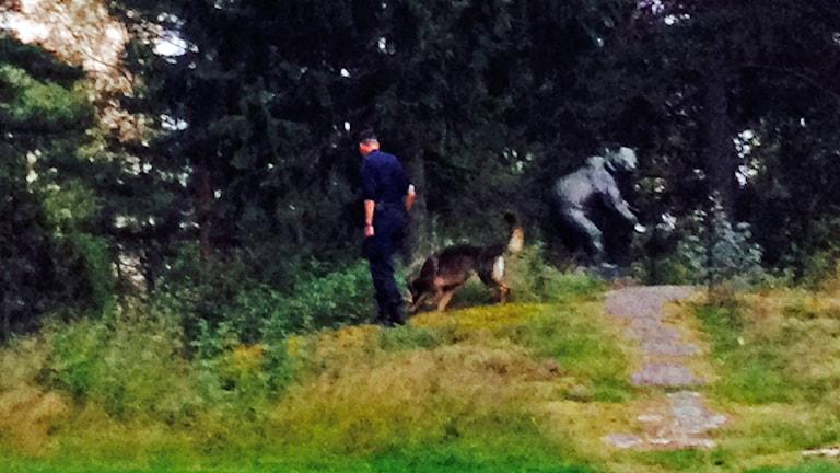 Poliser söker på avspärrad plats. Foto: Jenny Norberg/Sveriges Radio.