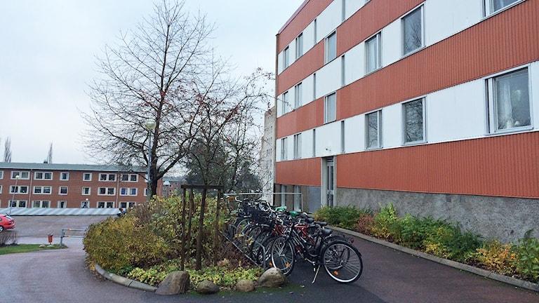 Ett bostadsområde. Foto: Annika Ström/Sveriges Radio.