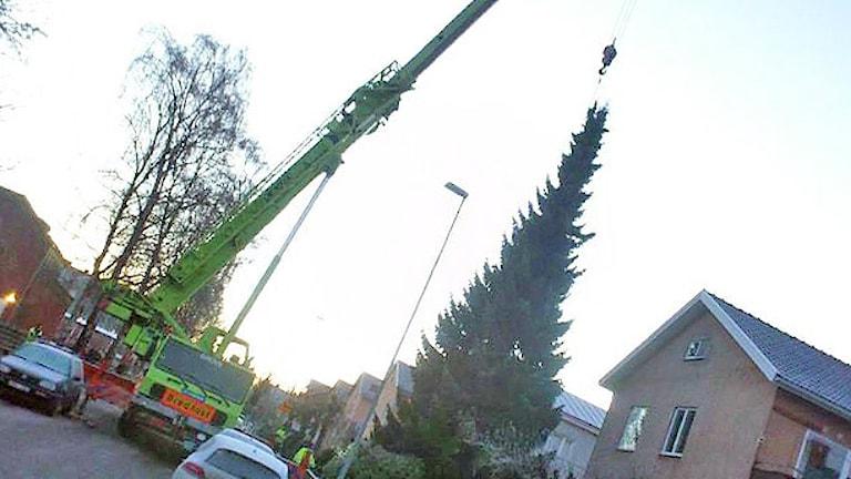 Enlyftkran och en julgran. Foto: Bengt Höglind/Sveriges Radio.