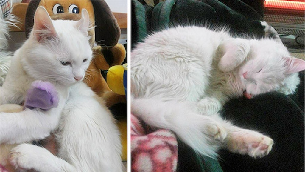 Katten Mela. Foto: Privat