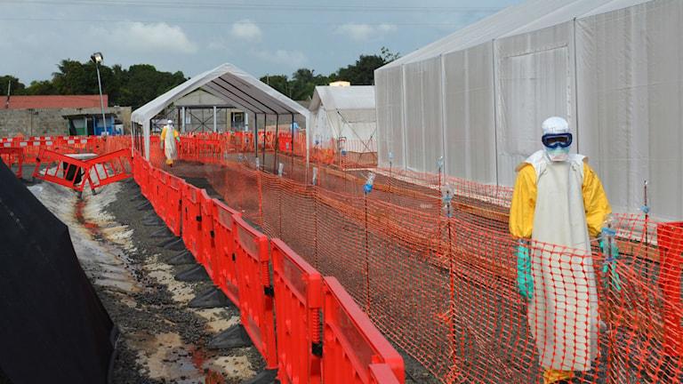 Arbetare i det eboladrabbade västafrika