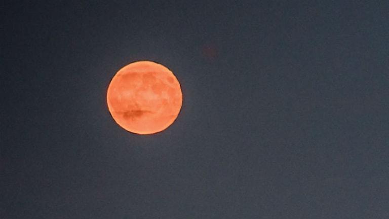 Blodröd supermåne. Foto: Geert Vanden Wijngaert/TT Bild