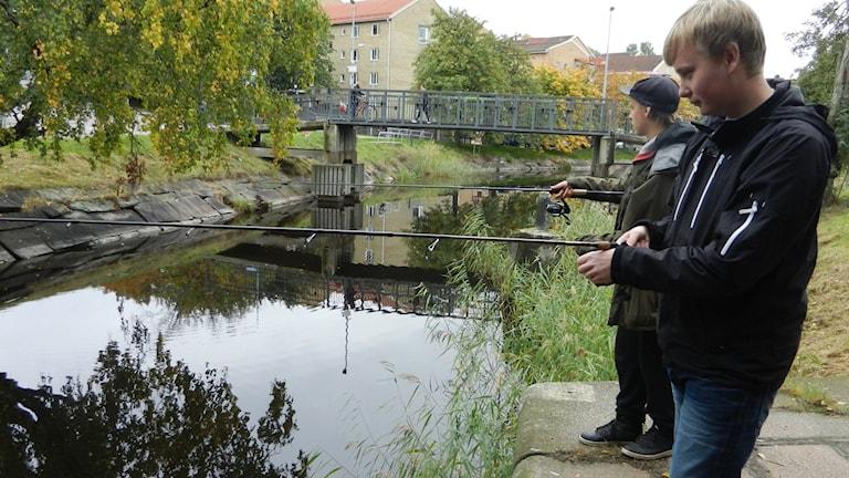 Kristoffer Velin och Linus Johansson sportfiskare i centrala Karlstad som jagade abborrar i helgen. Foto Roy Malmborg Sveriges Radio