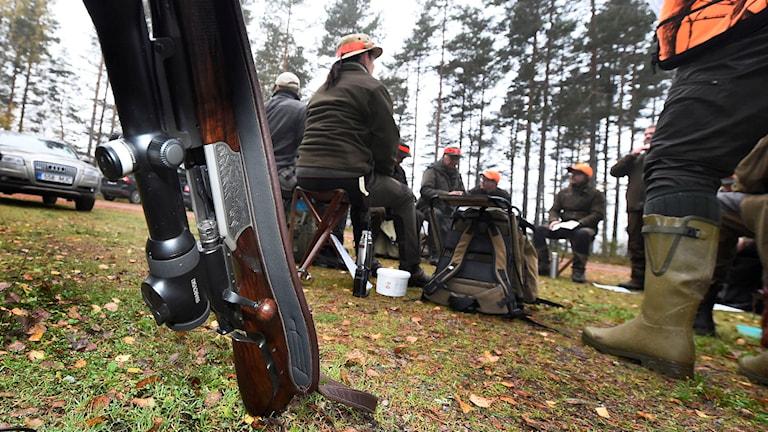 Älgjaktslag sitter samlade. Ett gevär i förgrunden. Foto: Mikael Fritzon/TT