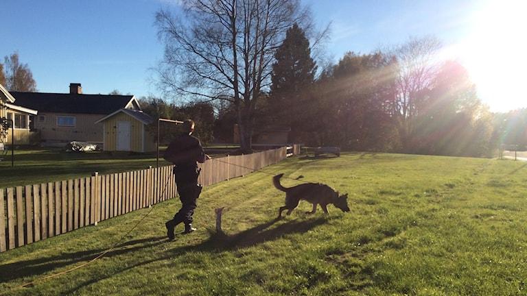 Polis med polishund. Foto: Annika Ström/Sveriges Radio