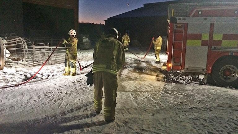Brandmän i arbete. Foto: Jenny Tibblin/Sveriges Radio.
