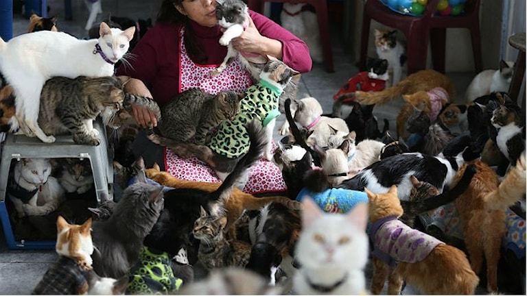 Många katter