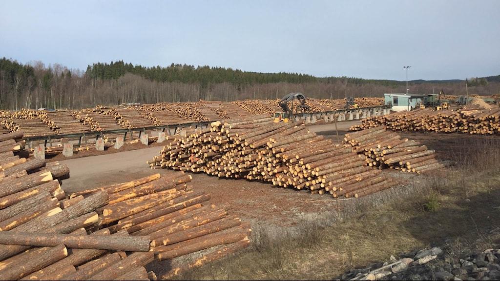 Här är timmerstockarna som kommer till sågen i Edane. I dag utnyttjas hela stocken då sågen hyvlar, tryckimpregnerar och målar. Foto: Anton Eriksson/Sveriges Radio