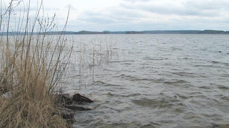 Sjön Visten, nordväst om Deje. Foto: Magnus Hermansson/Sveriges Radio.