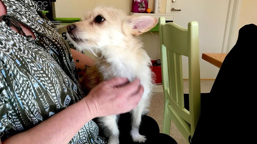 hund hittad i soptunna storfors