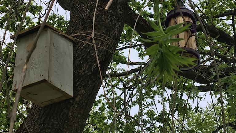 Två fågelholkar som hänger i ett träd.