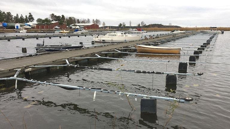 Några få båtar vid bryggorna vid Mörudden, Hammarö, i novemberkylan. Foto: Magnus Hermansson/Sveriges Radio.