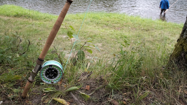 Ett fiskespö lutat mot ett träd. Foto: Terje Bendiksby/TT.