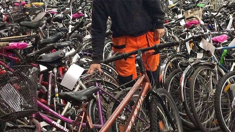 En massa cyklar. Foto: Annika Ström/Sveriges Radio.