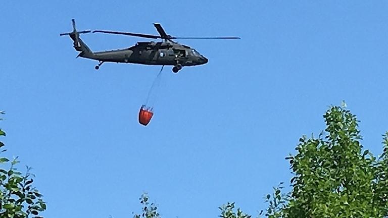 En helikopter arbetar med att släcka bränder. Foto: Per Larsson/Sveriges Radio.