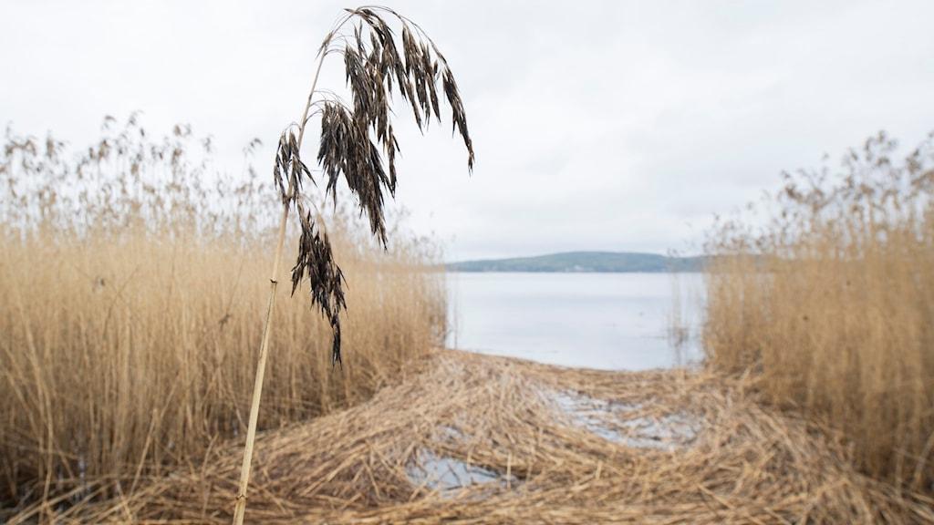 Sjön i Arvika.