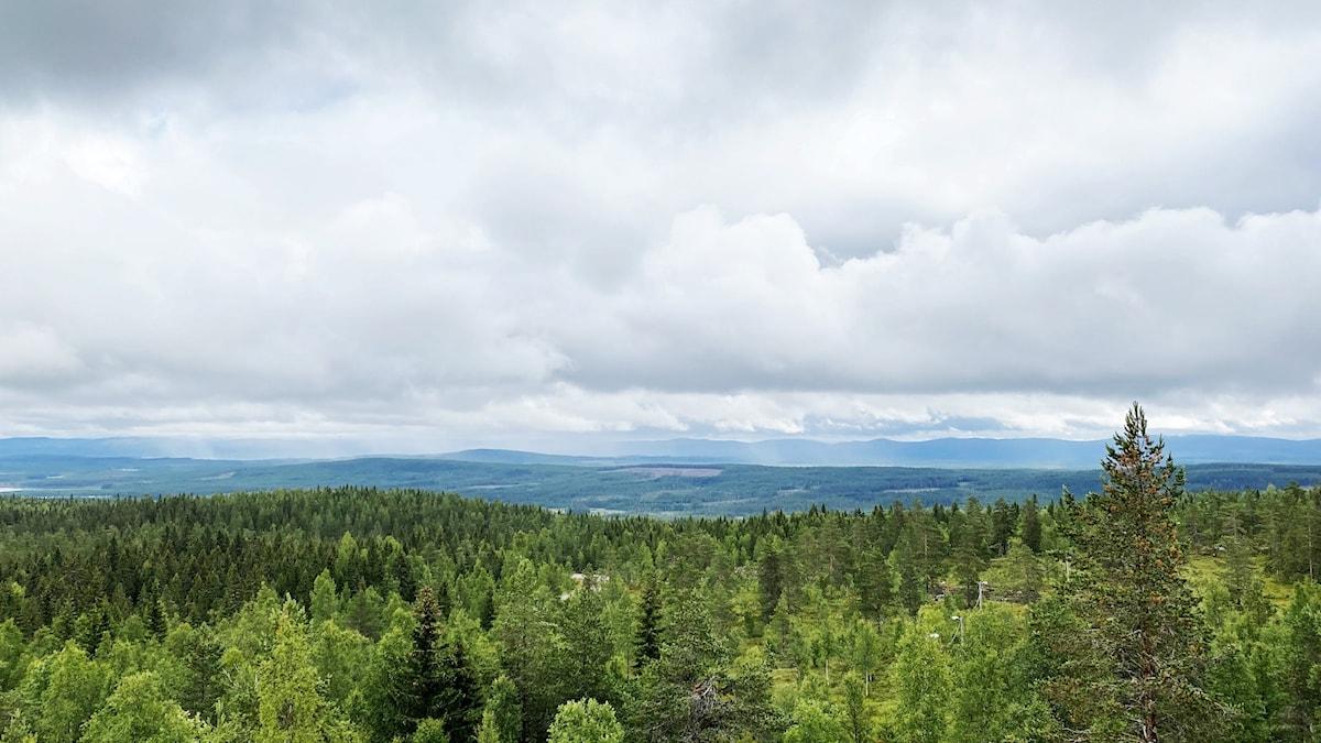 Vy från Långberget. Foto: Jonas Berglund/Sveriges Radio