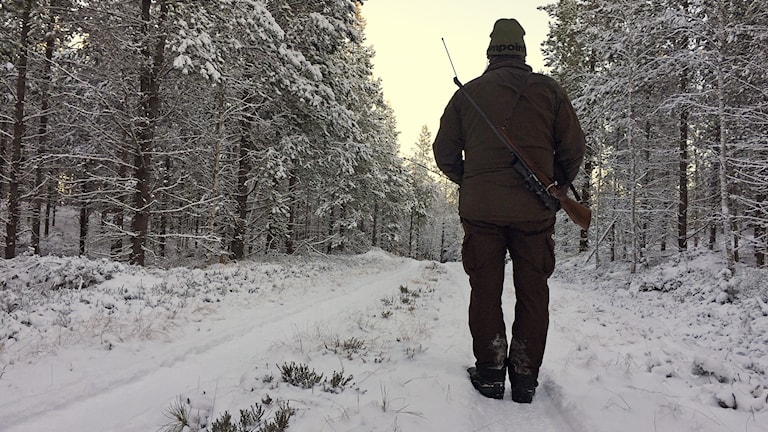 En jägare går på en vinterväg. Foto: Sara Johansson/Sveriges Radio.