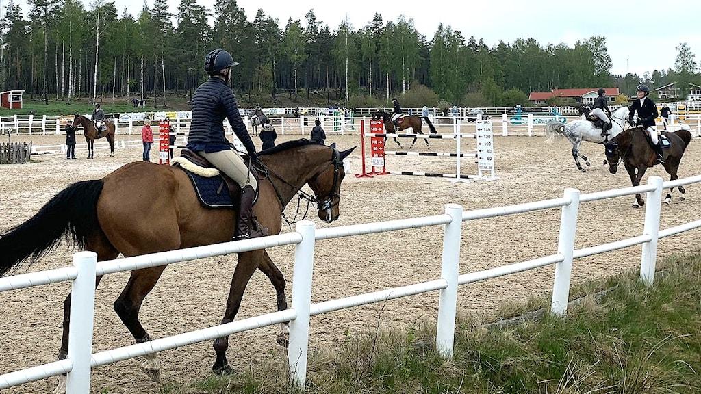 Hästar och ryttare under pågående hopptävling. Foto:  Gustav Jakobsson/Sveriges Radio.