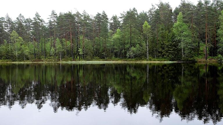 Sjö med skog i bakgrund. Foto: Vidar Ruud / NTB scanpix / TT