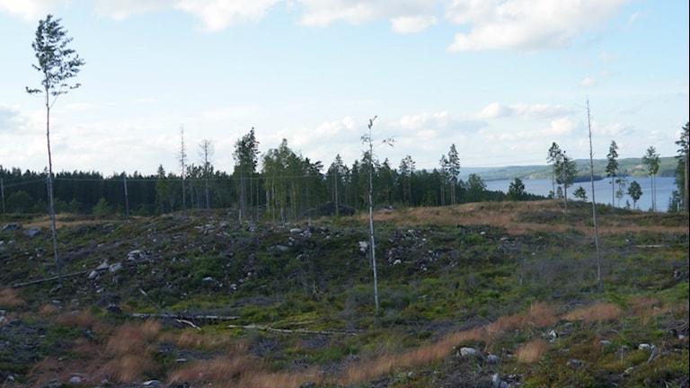 Glasskogens naturreservat