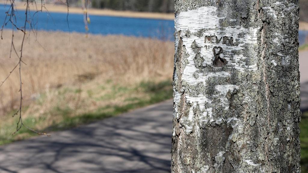 Kevins namn inristat i en björkstam i närheten av platsen där man hittade den fyraårige pojken. Foto: Tommy Pedersen/TT.