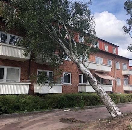 Träd har rasat över ett flerfamiljshus. Bild: Räddningstjänsten i Filipstad.