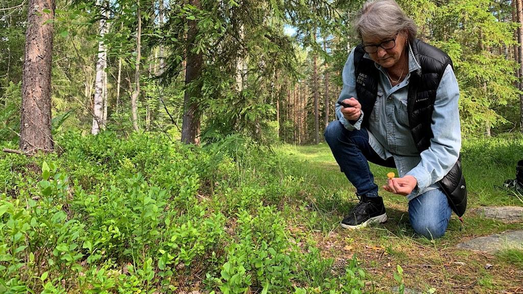 Svampkonsulenten Anna-Karin Rimo  på knä i skogen där hon tittar på svamp. Foto: Victoria Svärd Karlsson/Sveriges Radio