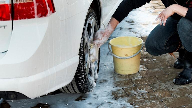 En person tvättar sin bil. Foto: Leif R Jansson/TT.