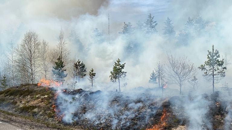 Brand i terrängen längs vägen vid Motjärnshyttan