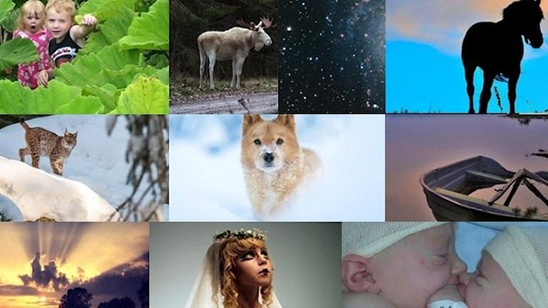 Ett collage av lyssnarbilder.