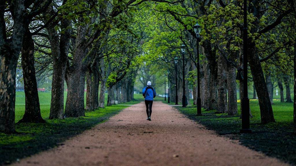 En person som joggar i en fin allé. Foto: Stian Lysberg Solum/TT.