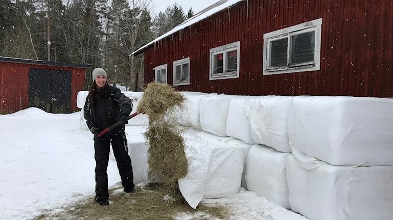 hö gräs foder silage Alexandra Åhs Långenäs Karlstad