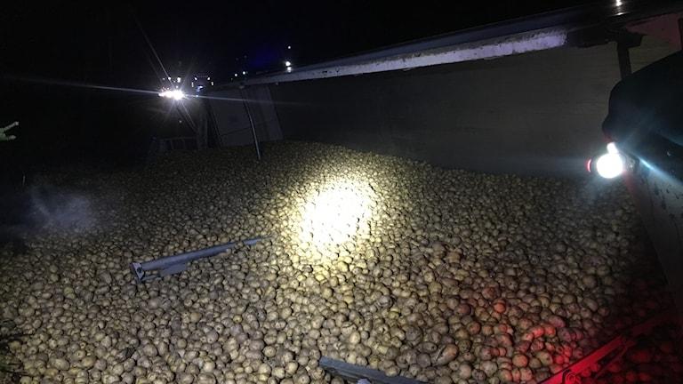 En lastbil med 36 ton potatis körde av vägen.