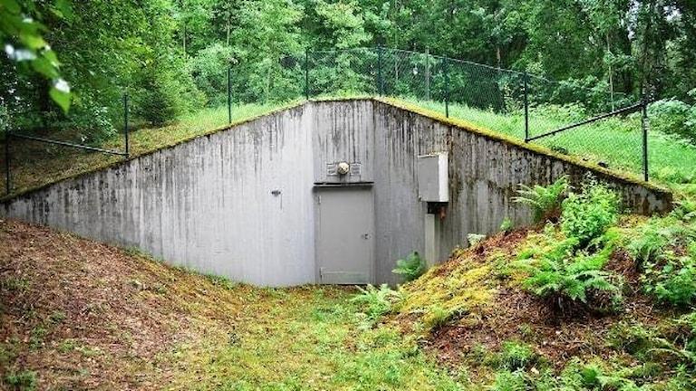 Grå betongvägg i grönska