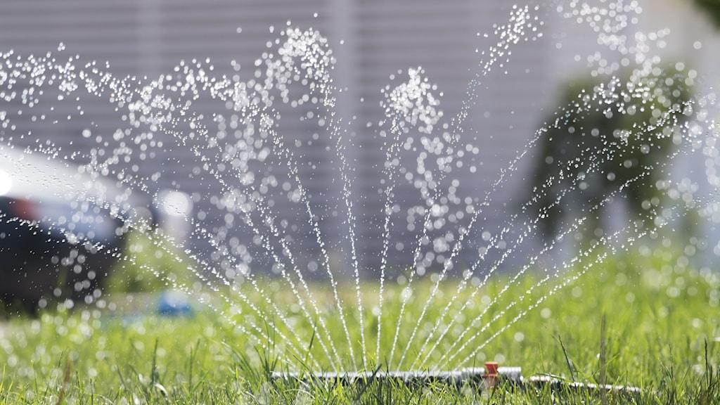 Vattenspridare igång på en grön gräsmatta.
